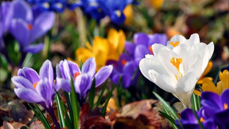 7 б текст песни споила весна: